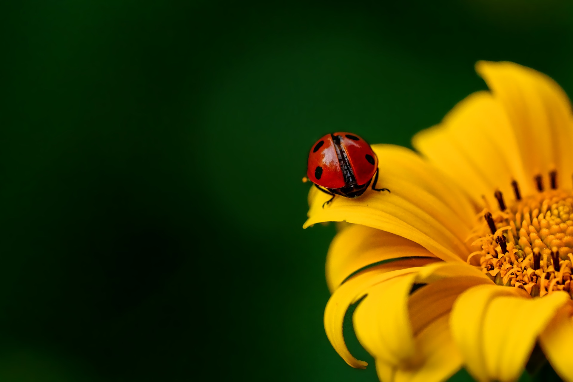 Image of ladybug on a flower