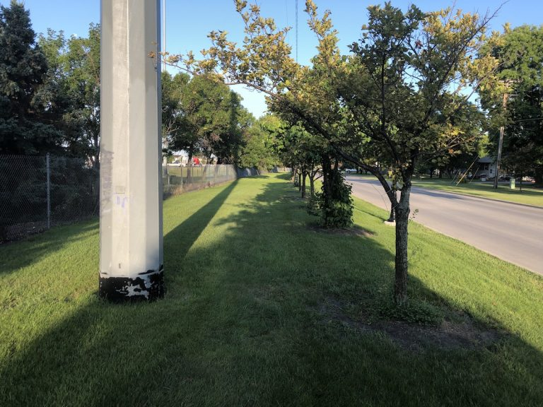 Photo of a strip of grass and trees in an urban area