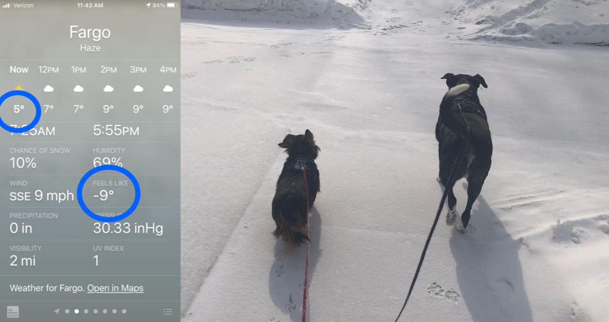 Screenshot of weather app and dogs