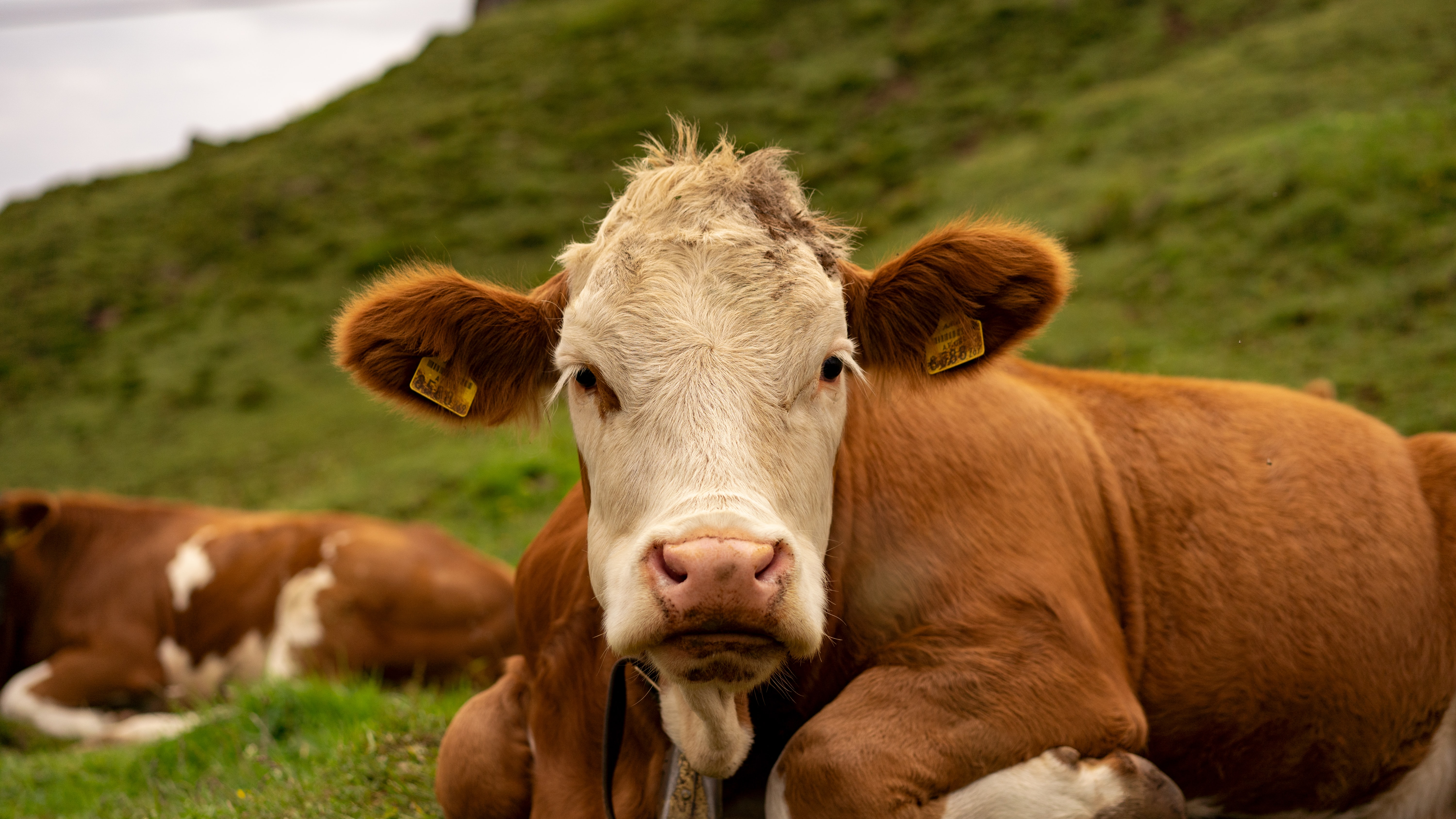 Photo of cattle for Farm Systems Reform Act post